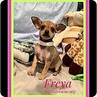 Adopt A Pet :: Freya - Milton, GA