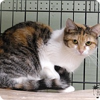 Adopt A Pet :: Callie - Marlinton, WV