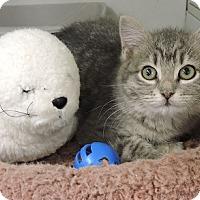 Adopt A Pet :: Makayla - Massapequa, NY