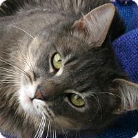 Adopt A Pet :: Akron - Republic, WA