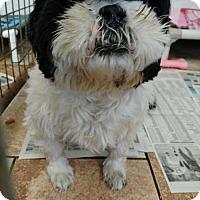 Adopt A Pet :: Max - Colfax, IL