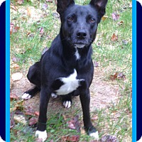 Adopt A Pet :: COOPER - Jersey City, NJ