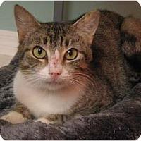 Adopt A Pet :: Duchess - Vero Beach, FL