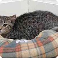 Adopt A Pet :: Miss Brown - Milwaukee, WI