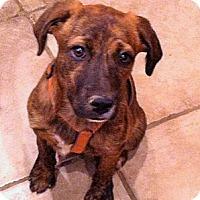 Adopt A Pet :: Kara - Phoenix, AZ