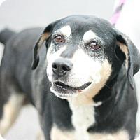Adopt A Pet :: Perra - Canoga Park, CA