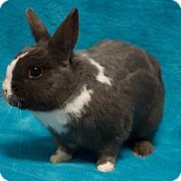 Adopt A Pet :: Bonaparte - Los Angeles, CA
