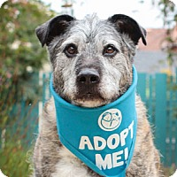 Terrier (Unknown Type, Medium) Mix Dog for adoption in Pacific Grove, California - Luka