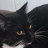 Adopt A Pet :: Sarah - Lucedale, MS