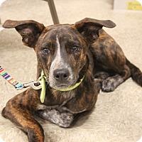 Adopt A Pet :: Sullivan - Wichita Falls, TX
