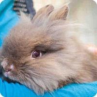 Adopt A Pet :: BINGO - Pittsburgh, PA