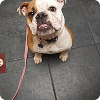Adopt A Pet :: Peaches (Adoption Pending) - Tempe, AZ
