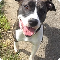 Adopt A Pet :: LUCY - Newport, OR