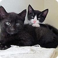 Adopt A Pet :: Miles - Riverhead, NY