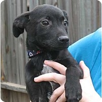 Adopt A Pet :: Bingo - Kingwood, TX
