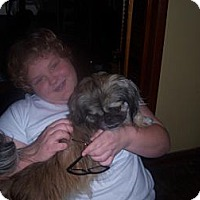 Adopt A Pet :: Hershey - Vansant, VA