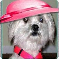 Adopt A Pet :: Happy - Mays Landing, NJ
