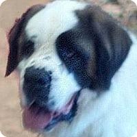 Adopt A Pet :: BOOMER - Glendale, AZ