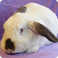 Adopt A Pet :: Lulu - Los Angeles, CA