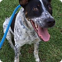 Adopt A Pet :: Ashland - Mission Viejo, CA