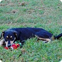 Adopt A Pet :: Elloise - Lufkin, TX