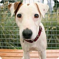 Adopt A Pet :: Bernie in Seguin - San Antonio, TX