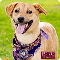 Adopt A Pet :: Charly - Marina del Rey, CA