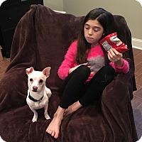 Adopt A Pet :: Maverick - Chicago, IL