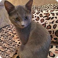 Adopt A Pet :: Montana - Westwood, NJ