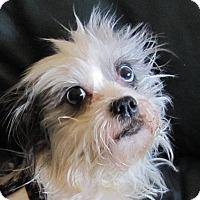 Adopt A Pet :: HOLLYpending - Eden Prairie, MN