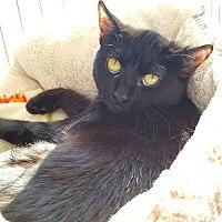 Adopt A Pet :: Chips - Salisbury, MA