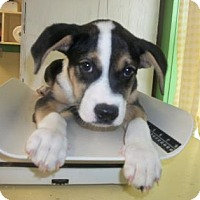 Adopt A Pet :: Button - Picayune, MS