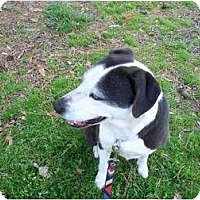 Adopt A Pet :: Bonnie Blue - Washington, NC