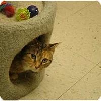 Adopt A Pet :: Brinkley - Muncie, IN