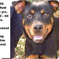 Adopt A Pet :: # 512-10 @ Animal Shelter - Zanesville, OH