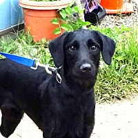 Adopt A Pet :: Girly Girl - Courtesy Posting - New Canaan, CT