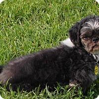 Adopt A Pet :: Mr. Peabody - Prole, IA