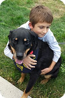 Rottweiler Mix Dog for adoption in Frederick, Pennsylvania - Jade