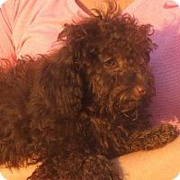 Adopt A Pet :: Lyza - Westport, CT