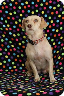Terrier (Unknown Type, Small) Mix Dog for adoption in Yucaipa, California - Rio