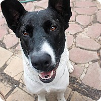 Adopt A Pet :: Lucy - San Diego, CA