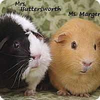 Adopt A Pet :: Butterworth & Margerine - Santa Barbara, CA