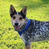 Adopt A Pet :: Gunner - Ft. Myers, FL