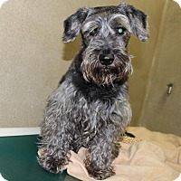 Adopt A Pet :: 24458 - Tobby - Ellicott City, MD
