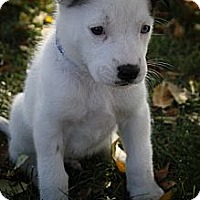 Adopt A Pet :: BunglelowBill - Broomfield, CO
