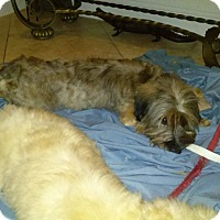 Adopt A Pet :: Matthew - Miami, FL