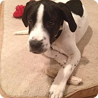 Adopt A Pet :: Oscar - Albuquerque, NM
