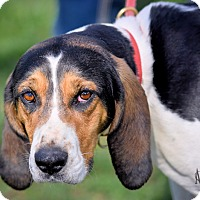 Adopt A Pet :: Josie - Martinsville, IN