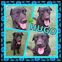 Adopt A Pet :: Hugo - Scottsdale, AZ