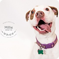Adopt A Pet :: Millie - Kansas City, MO